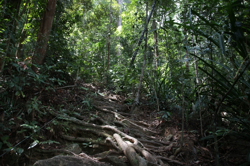undurchdringlicher tropischer busch